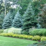 Landscape Boulder +backyard +grass +trees Design, Pictures, Remodel, Decor and I...