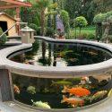Above Ground Fish Pond Designs
